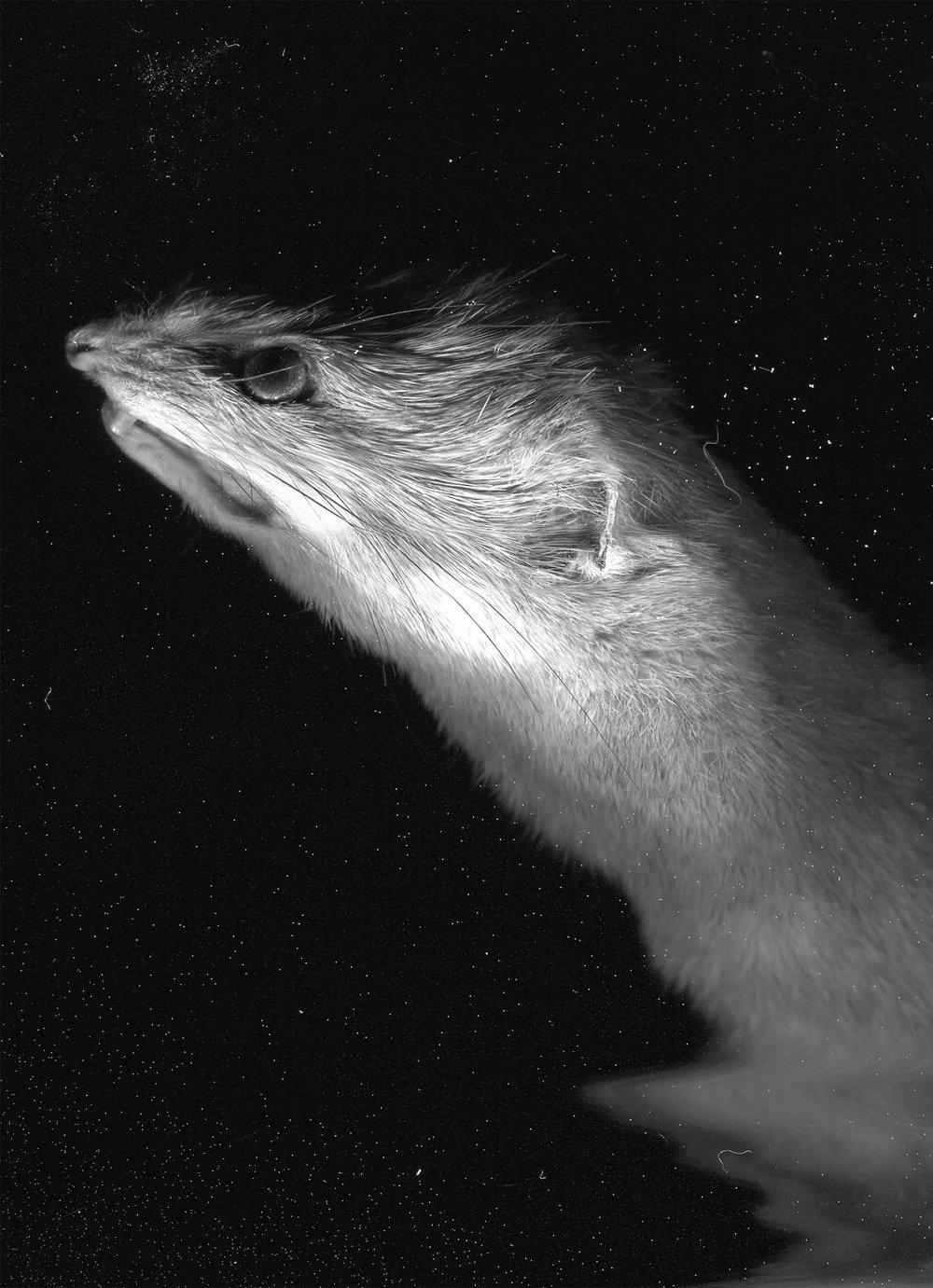 Animalia Variabilis