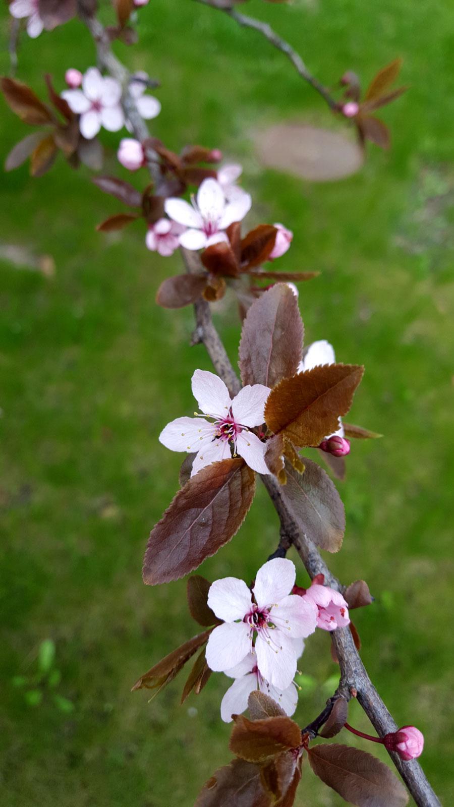 Spring01