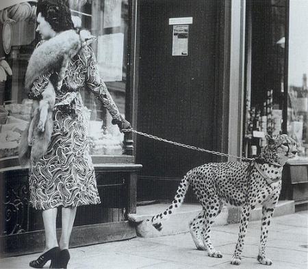 Fantasy Art Girl With Pet Cheetah