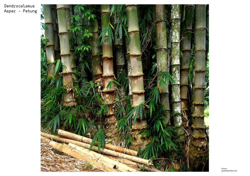 bambooPETUNG-01-01.png