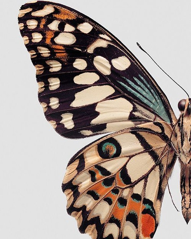 """""""I've always loved butterflies, because they remind us that it's never too late to transform ourselves."""" -Drew Barrymore  #refinement #springcleaning #kcp #kcpr #publicrelations #kcprojects #pr #butterflies"""