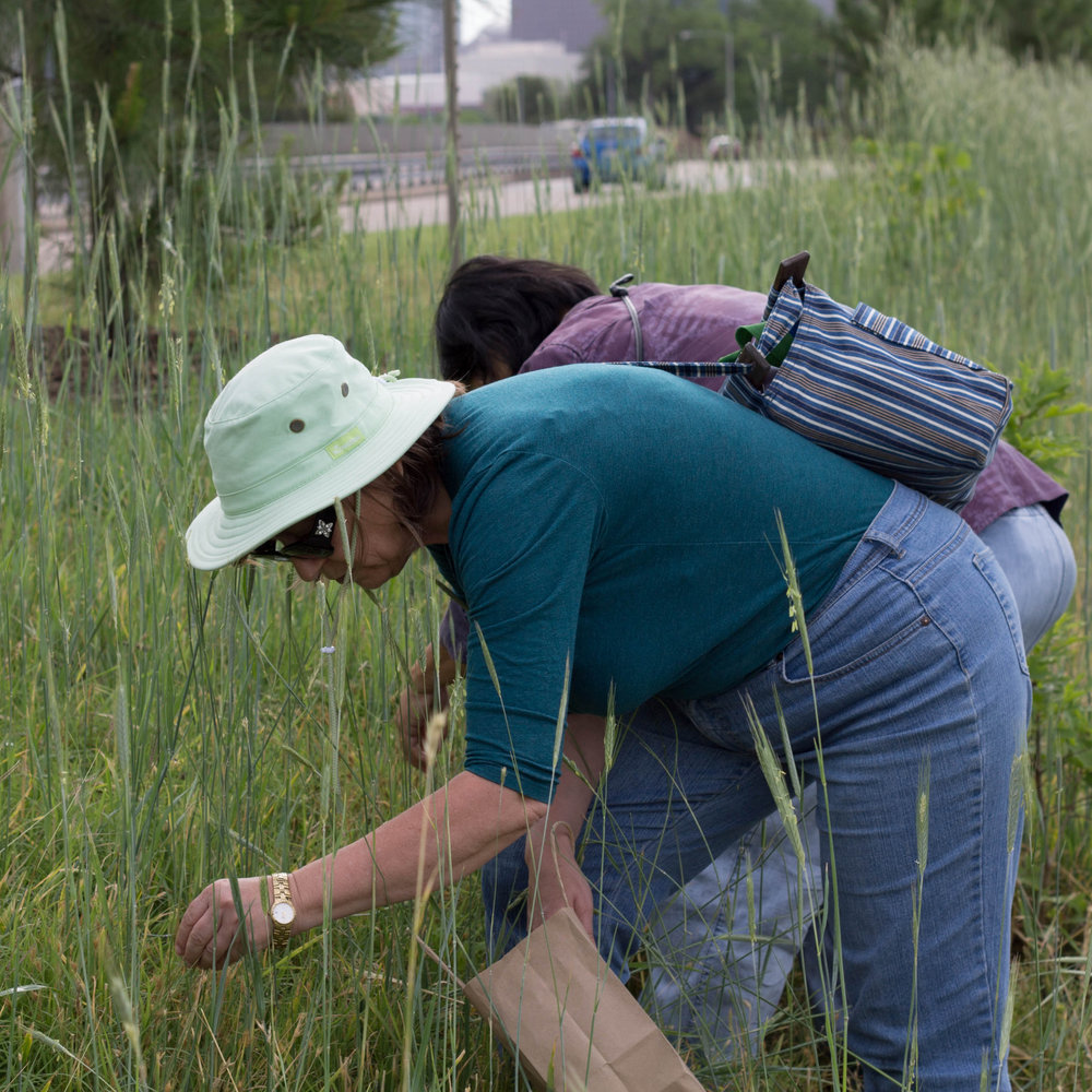 Become a Seed Collector! We need your help to collect more native seeds.