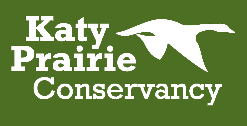A nonprofit land trust working to preserve the coastal prairie, KPC protects nearly 18,000 acres on the Katy Prairie and more than 5,000 acres in Matagorda County.