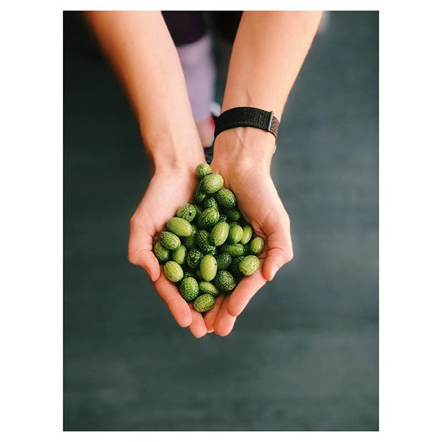 One of our favorite in-season fruits right now are these Mexican Sour Gherkins: looking like mini watermelons but tasting like tangy cucumbers, we love pickling them or adding them to a salad. Look for them at your local #farmersmarket this weekend! #farmtotable #marketkitchentable #eatlocal #seasonal