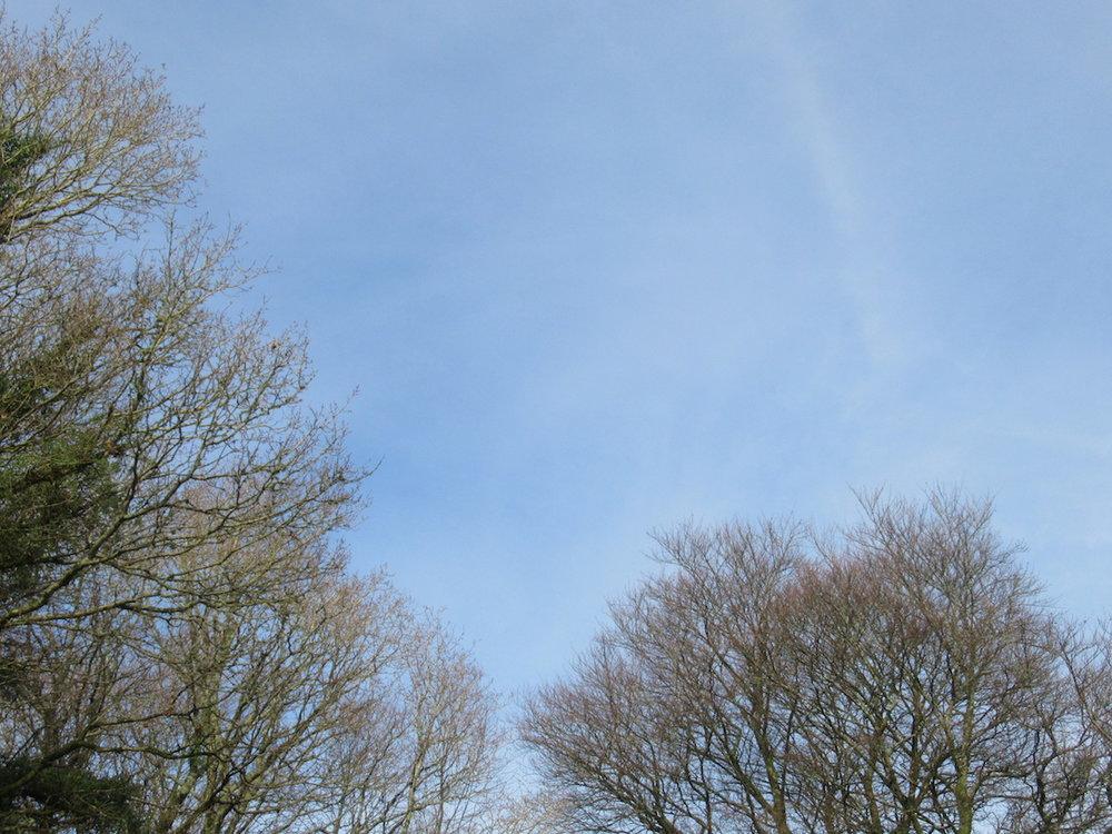 blog-2-trees.jpg