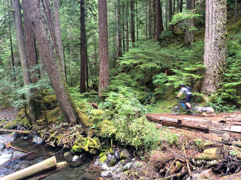 Furry blurry forest friends. Jim & Buddy, Olympic Peninsula, WA