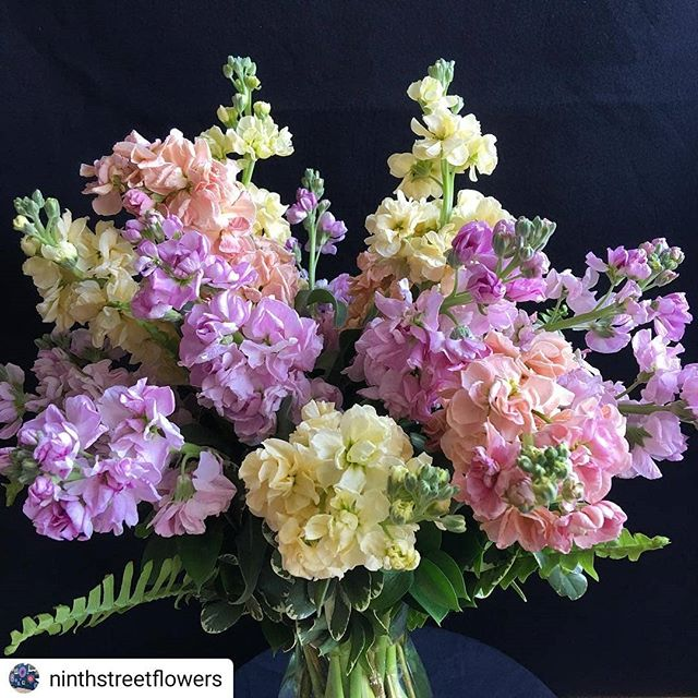 ALL THE pastel Easter vibes! 🐰  #Repost @ninthstreetflowers • • • • • Wouldn't a bouquet of mixed stock flowers be a lovely Easter gift or a perfect addition to your Easter decor?  #ninthstreetflowers#easterflowers #eastergift #stockflowers #happyeaster #flowerarrangement #pastelflowers #ninthstreetdurham #ninthstreet #durham #durhamflorist #localflorist #nofilter #independentflorist @9thstreetdurham @shopindiedurham @durhammag @shopdurhamnc