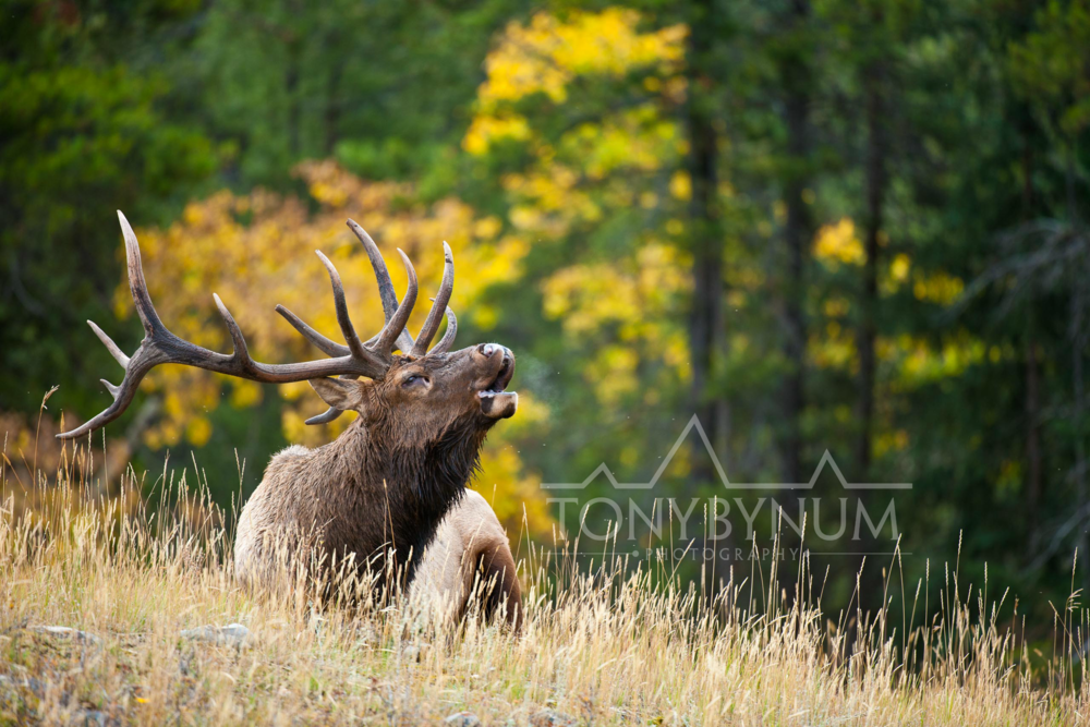 Biggame-wildlife-bynum-30300.jpg