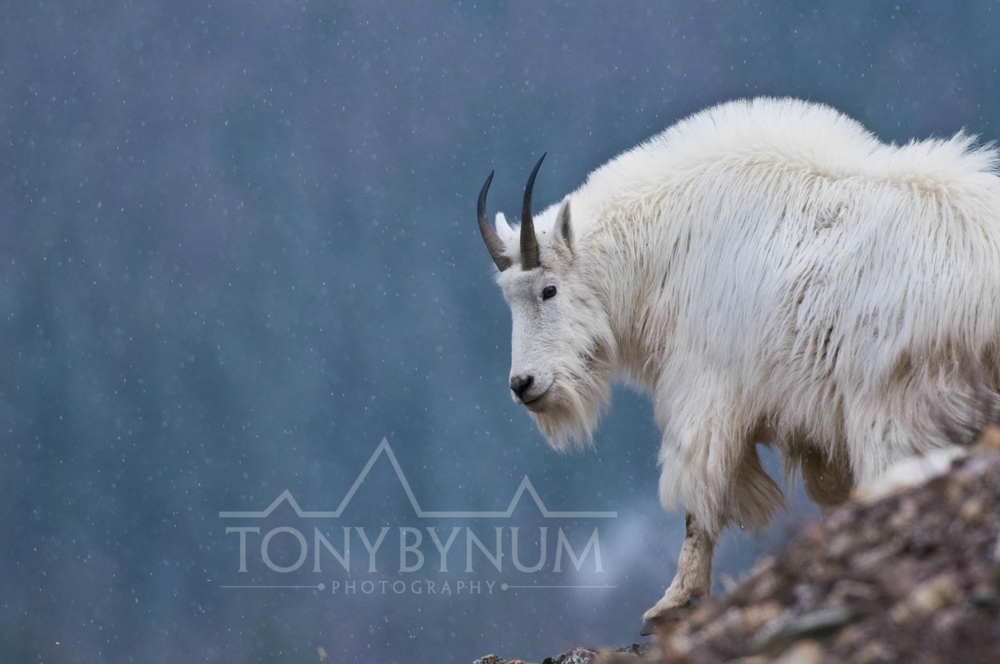 Copyright - Tony Bynum Photography