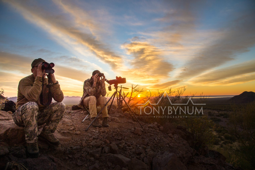 Two hunters glassing for desert sheep in Sonora, Mexico. Pete Brownell looking through his swarovski binoculars sun rising in the background. © Tony Bynum