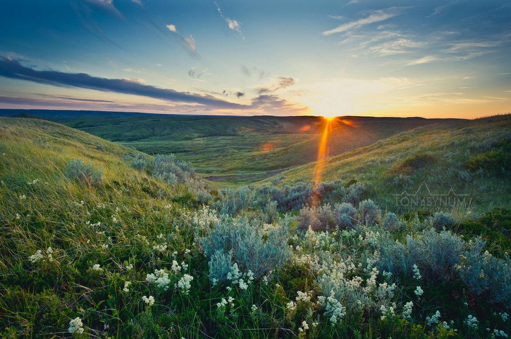 Wild Montana Prairie Sunrise