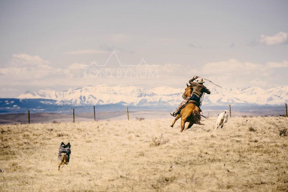 cowboys_bynum-6617.jpg