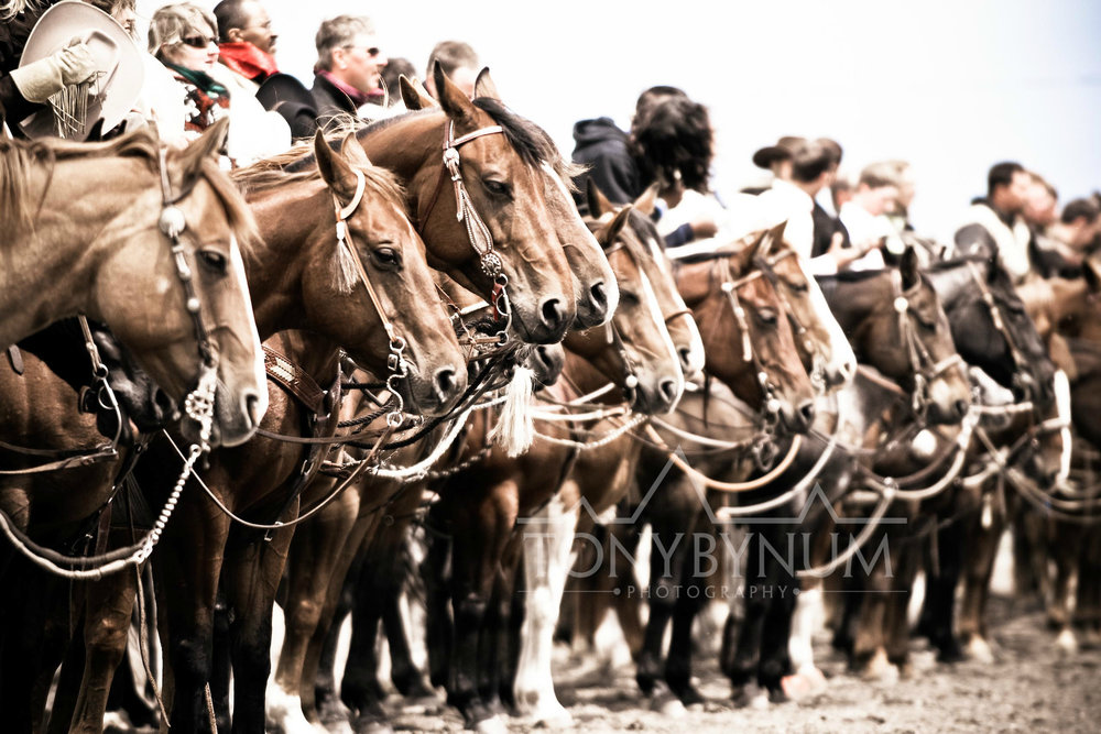 cowboys_bynum-4768.jpg