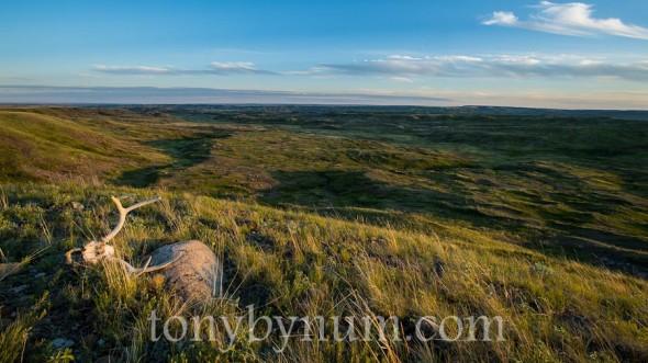 bynum-prairie-June 21- 2012-TAB_1385