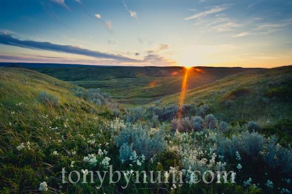 bynum-prairie-June-21-2012-TAB_1431-590x392.jpg