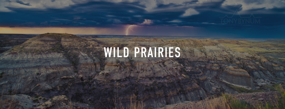 "Tap to view my ""Wild Prairies"" Project"