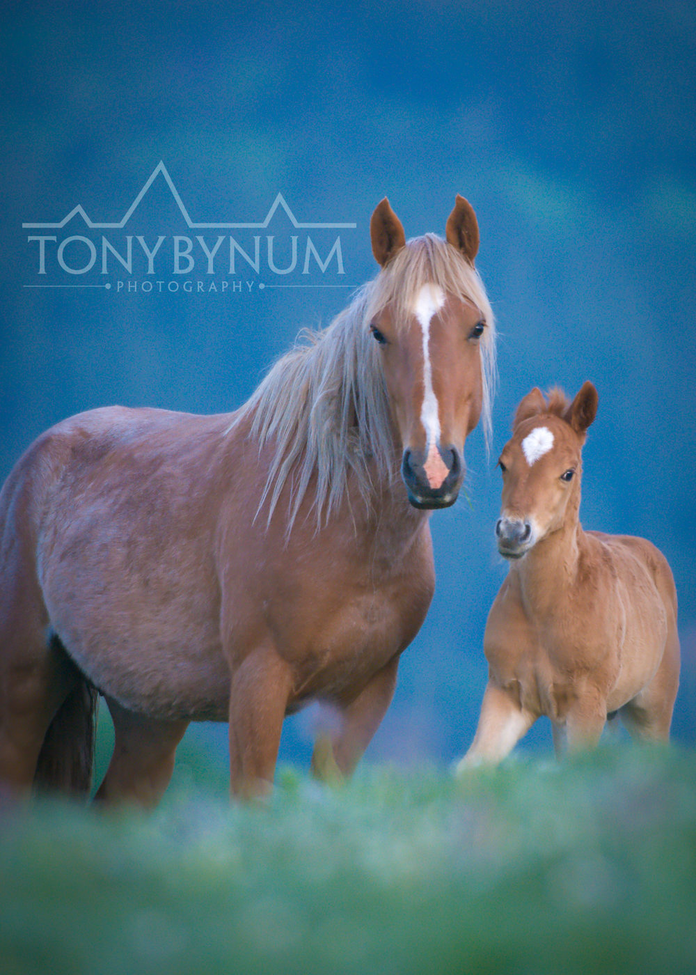 palomino-horse-mare-foal-1803-.jpg