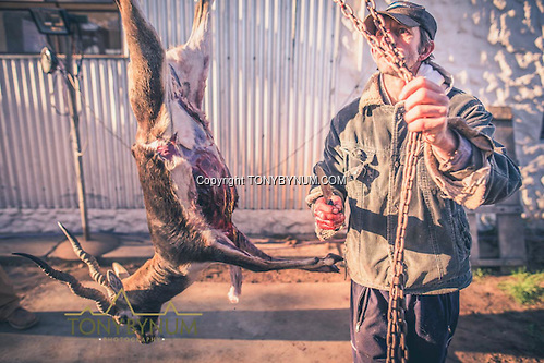 The skinner hoists the blackbuck a bit higher in order to finish processing the animal. La Pampa, Argentina ©tonybynum.com