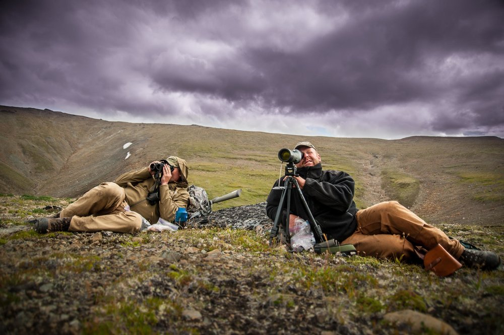 Dall sheep hunting with Swarovski Optics, in Northern British Columbia, Canada. © Tony Bynum