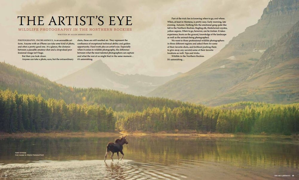 A cow moose wonders off across a placid lake in Glacier National Parks, Many Glacier Valley, Montana. This image and others can be purchased, visit this link © Tony Bynum