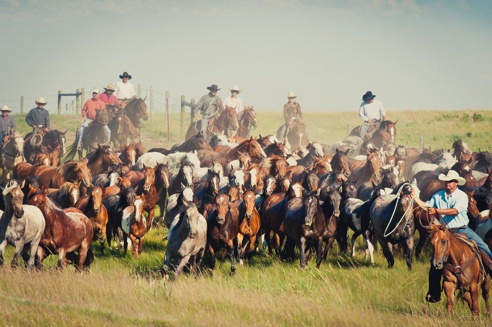 cowboys_bynum-8491.jpg