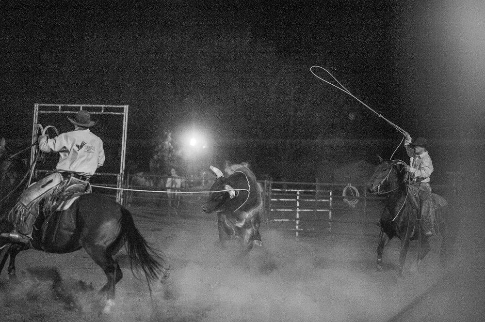 Team roping Montana Style.
