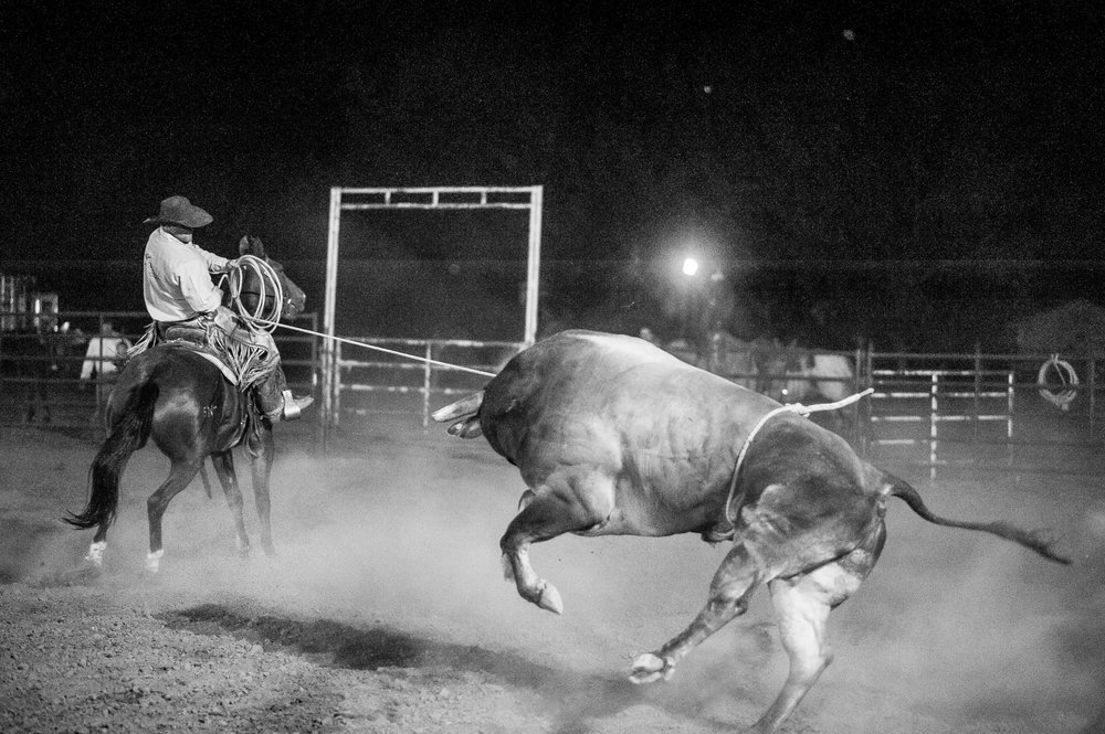 Roping Bulls . . .
