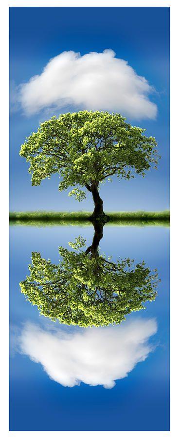 TreeReflection.jpg