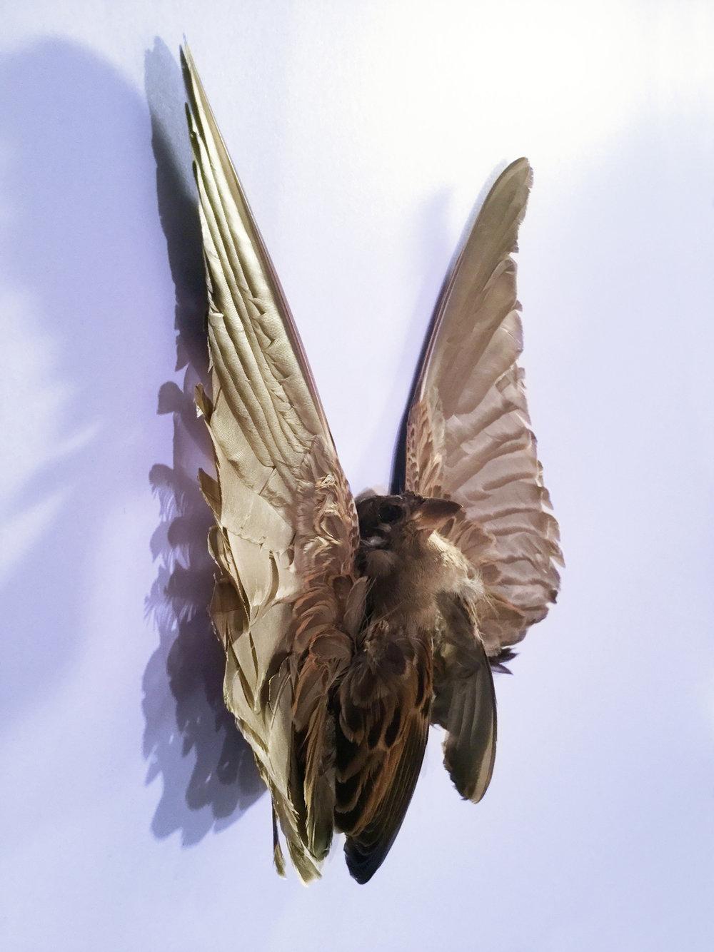 BtterflyBird.jpg