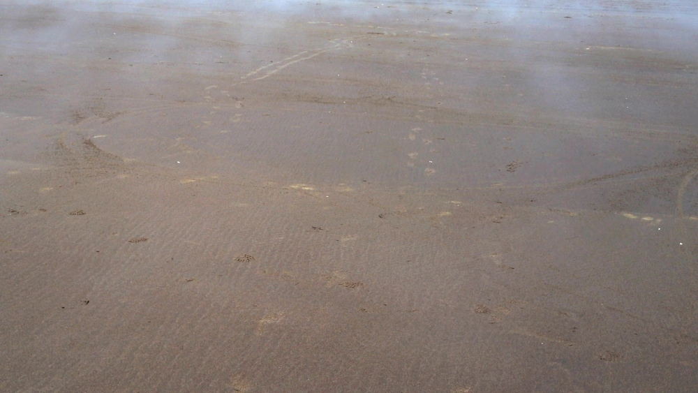 "video still from ""Ocean Shores FOG""    TimeSCAPES, Landscapes in Motion: VIDEO and PAINTING      sound, wind, water, color and light ... shifting, always in motion       TimeSCAPES  began in 2008 and continues today. For each new location I find myself in I am recording a painting about to happen through sound and image - seeing through the camera lens the movement of painting with light and time passages.  The more I am arrested by the site and the deeper the impression, the more I am able to translate this into the video editing and then into the painting process. The goal is to create seamless video loops that will be played non-stop either by themselves or in tandem with several others in the studio.  Inside the studio I am surrounded by these sounds, videos and paintings in all stages. It is not one painting, nor one video nor one sound bite, but a time based installation that prompts me physically to translate through my body the fluidity of these onto the painted surfaces. I work best on a larger scale and when I can move from one work to another. Really, this is performance with my body, surfaces and paint.  Betty Jo Costanzo, © 2018"