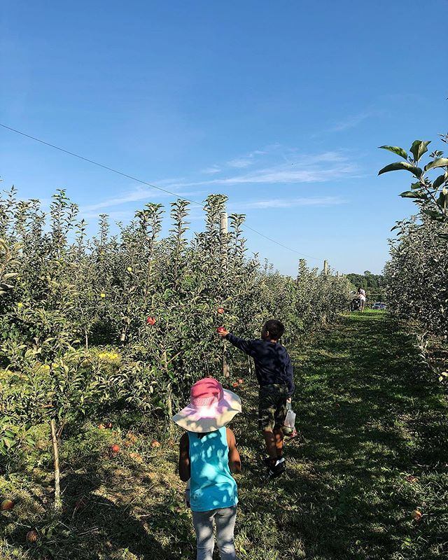 took the kiddos to the orchard and taught them how to make pies the old fashioned way 🥧 also taught them to always try to support local agriculture 🌱