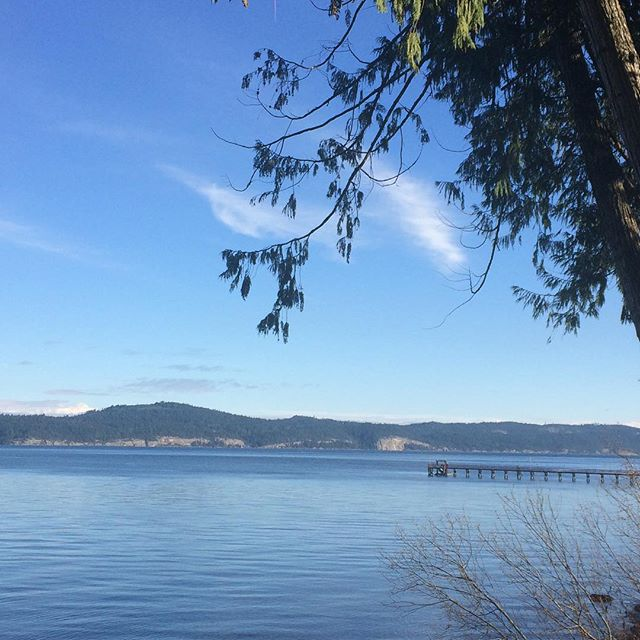 Midday walk with my fur babies in this beautiful place. #beautifulbritishcolumbia #hellobc #saltspringisland #soulmedicine