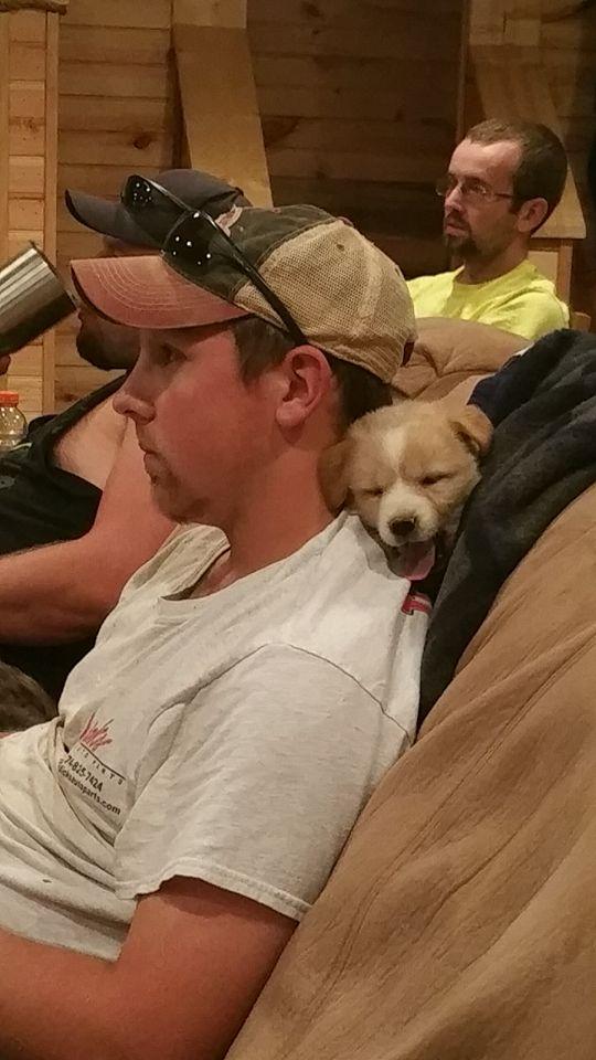 Tennessee Mutt Puppies en Facebook