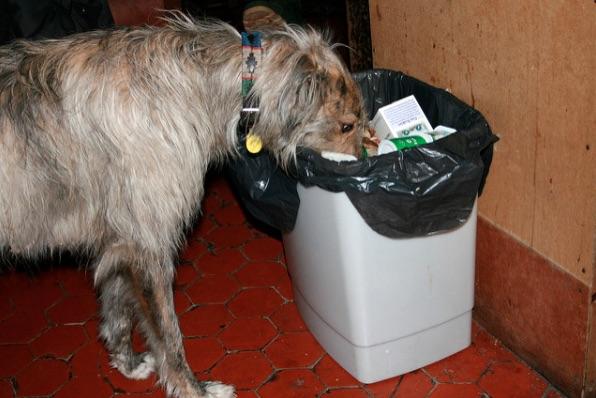 Por qué mi perro come basura? — Instituto Perro