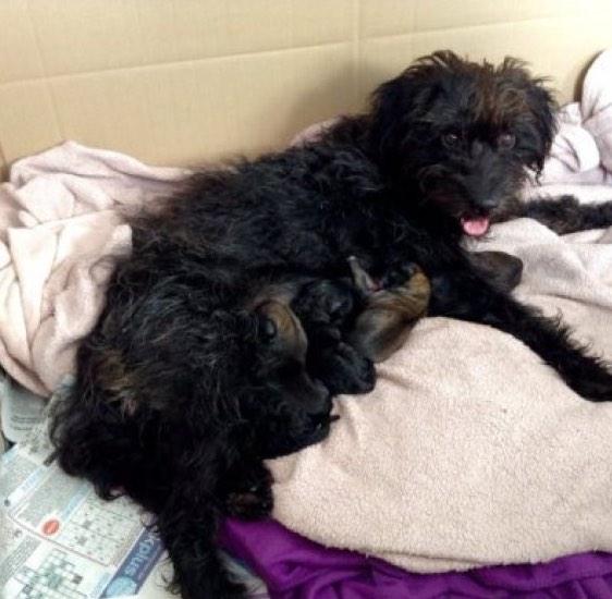 mujer-viajo-10-mil-km-adoptar-perro-la-salvo-ataque 2.jpg