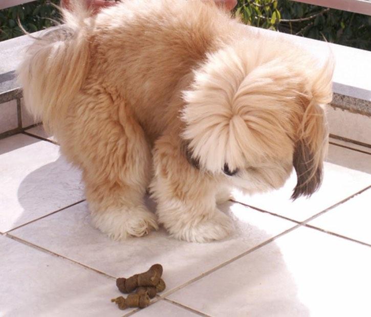 Tu Perro Come Caca Instituto Perro