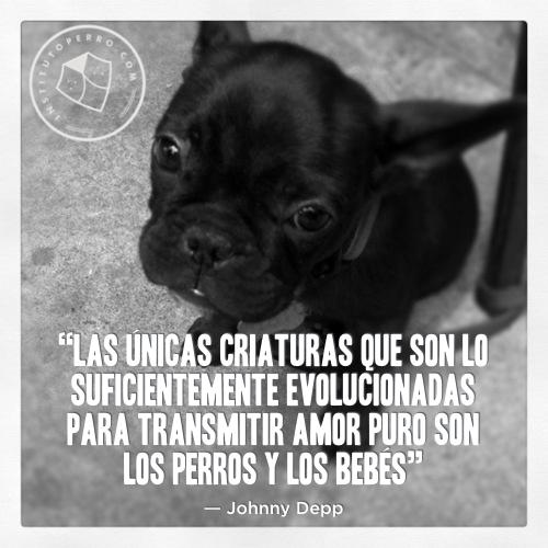 Frasesamor Frases De Amor Para Animales