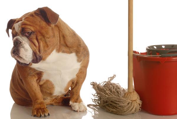 Como Limpiar Pipi De Perro De La Alfombra Instituto Perro