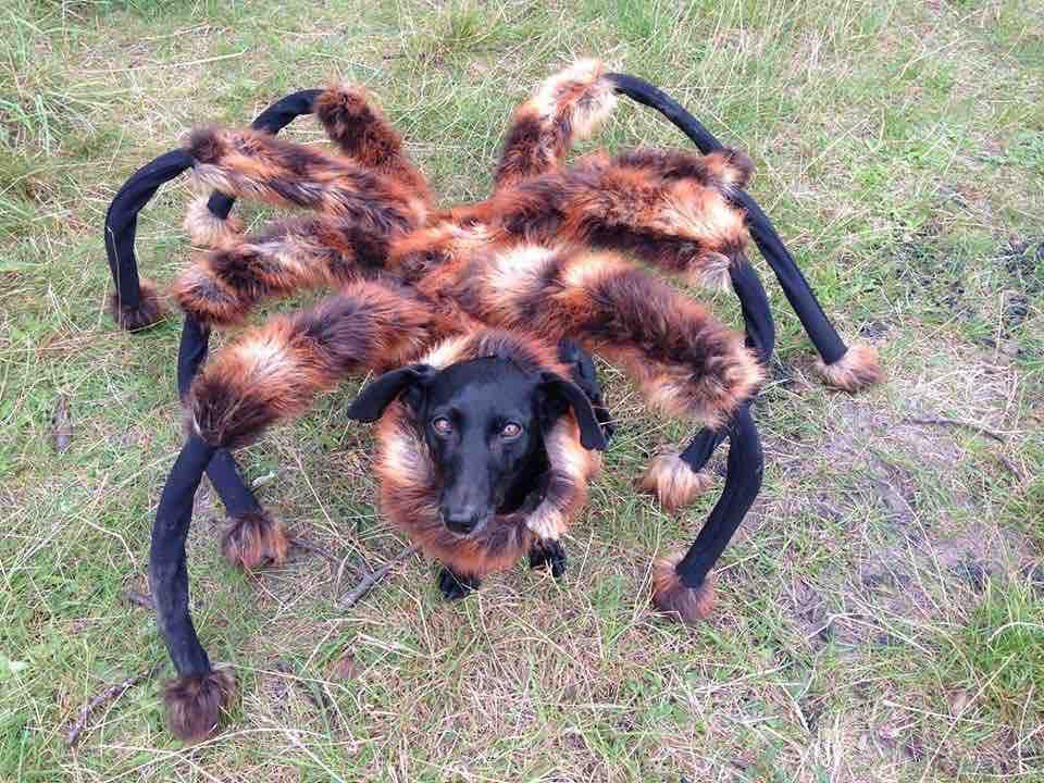 broma-del-perro-arana-gigante-disfraz.jpg