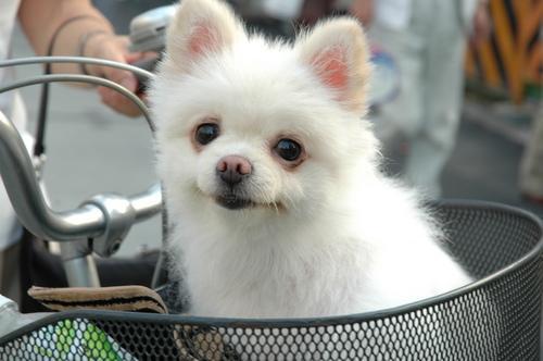 perro canasta bici.jpg