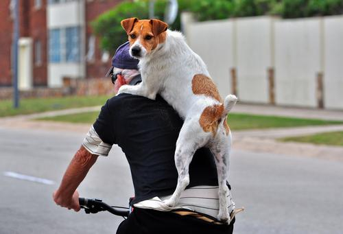 perro bici no.jpg