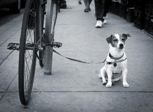 perro bici amarrado.jpg