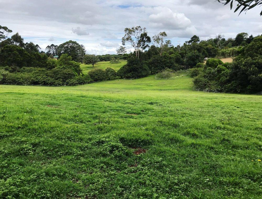 green paddock 171117.JPG