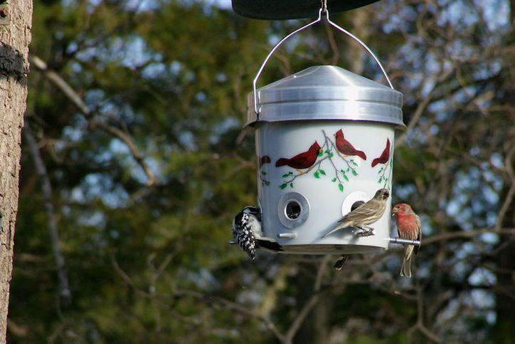 Birds Feeder.jpg