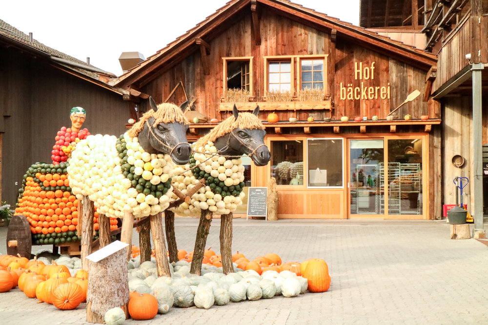 Pumpkin farm Switzerland - Jucker Farm