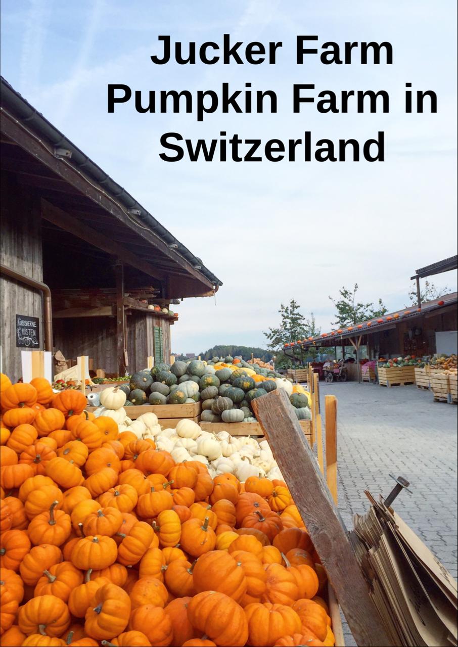 pumpkin farm in switzerland