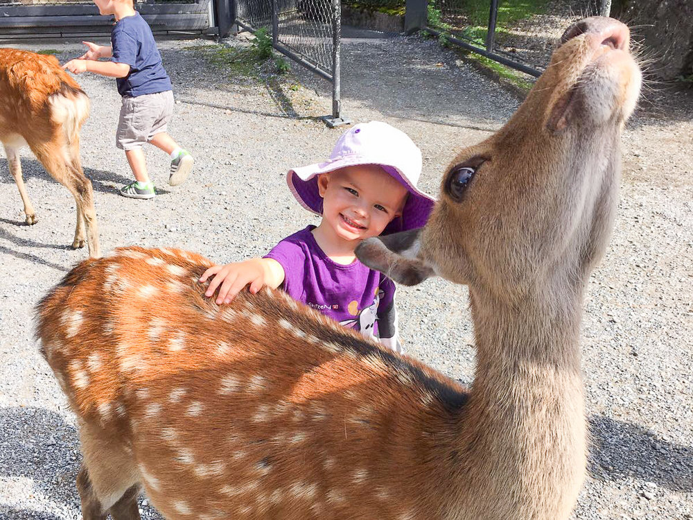 Get up close and personal with the deer at the Tierpark Goldau