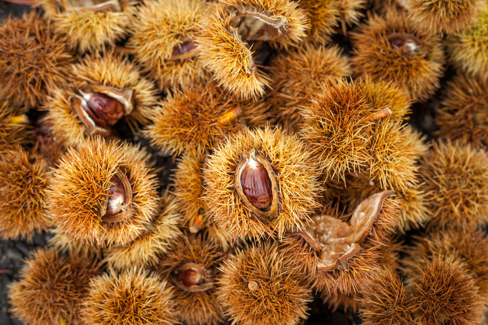 Hot Chestnuts called Marroni