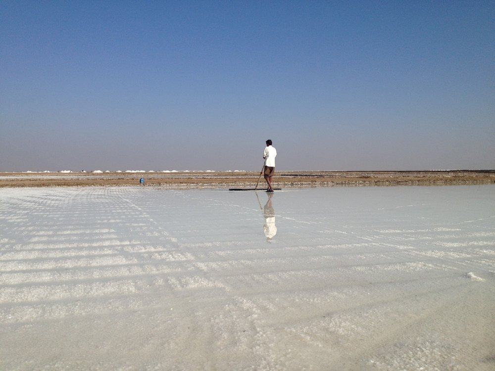 Farming salt in the Little Rann