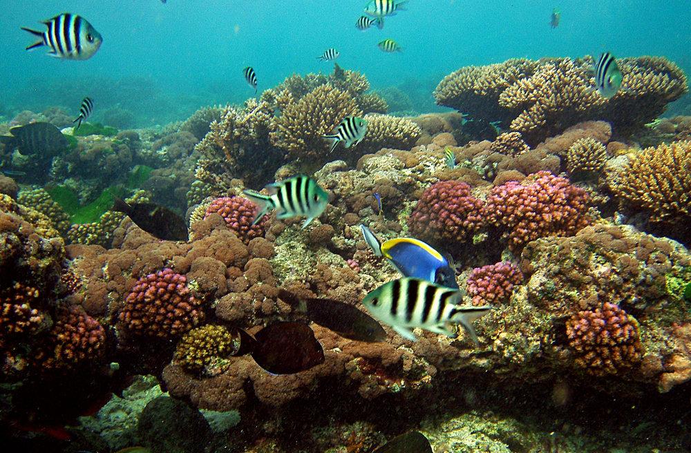 fregate-conservation-marine5.jpg
